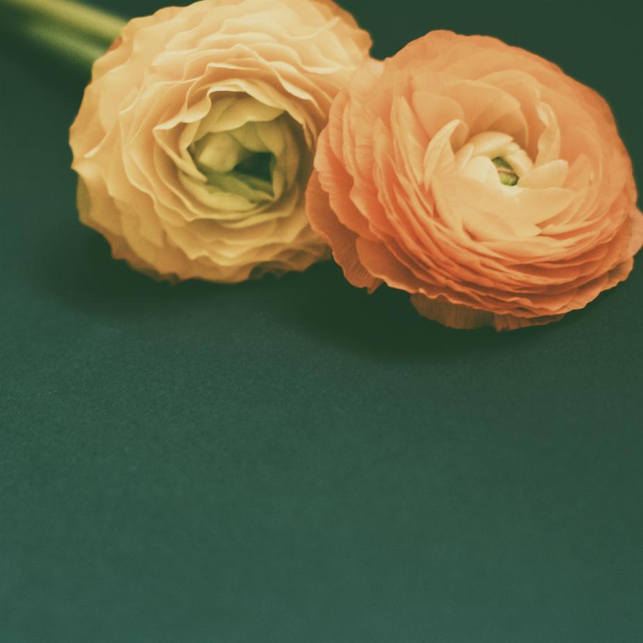 Glasbild Blumen Beside You von JUNIQE - Künstler: Morgan Kendall | Dekoration > Bilder und Rahmen > Bilder | Green - Orange | JUNIQE