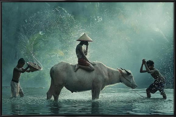 Water Buffalo - Vichaya - Poster im Kunststoffrahmen