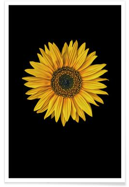 Sunflowers-Framed Print Collage