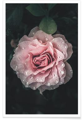 Buy Rose Art Prints And Posters Online Juniqe