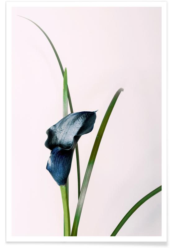, Callalily 01 Blue Poster