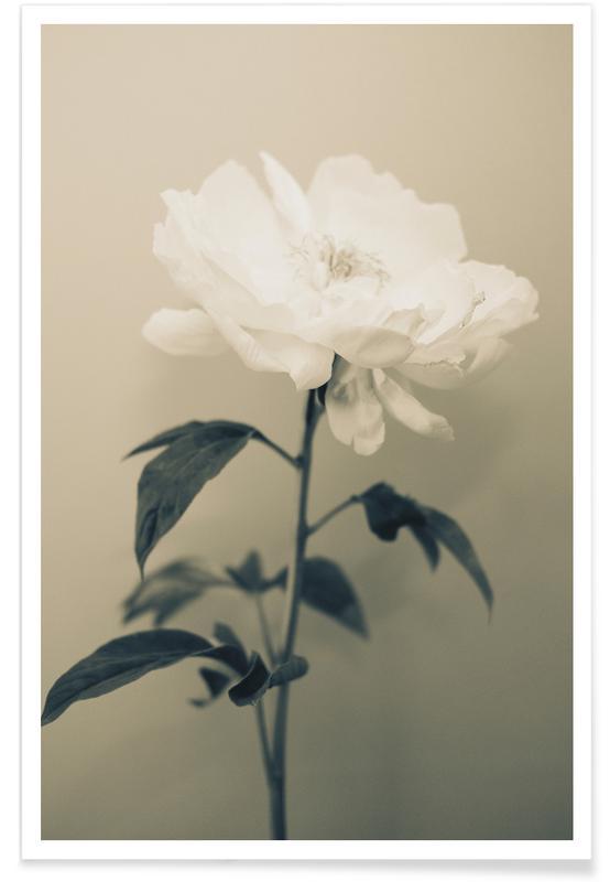 Blätter & Pflanzen, Peony stilllife -Poster