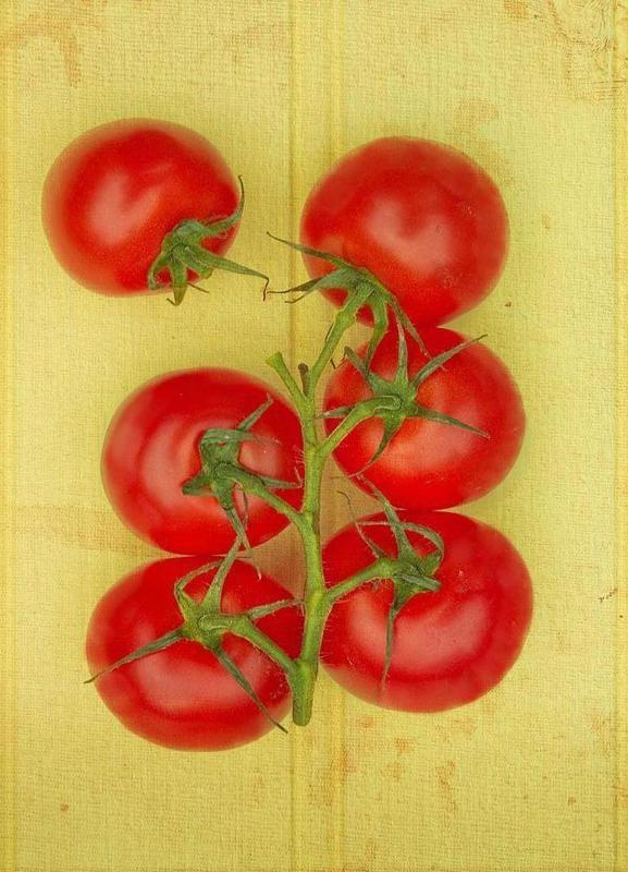 Big Tomatoes toile