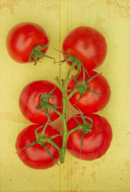Big Tomatoes acrylglas print