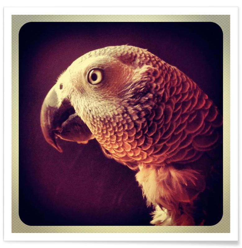 Parrots, Dicky Gell Poster