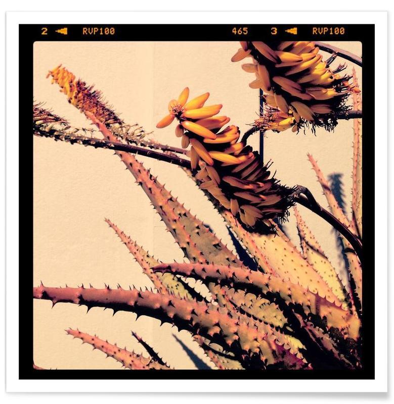 Cactussen, Homeland poster