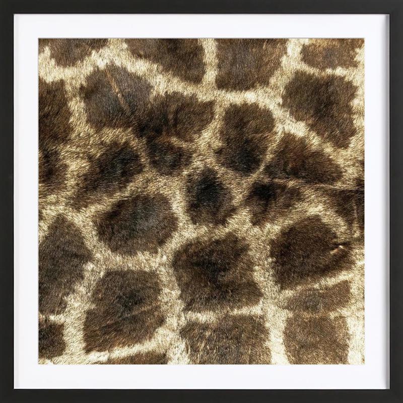 Giraffe ingelijste print