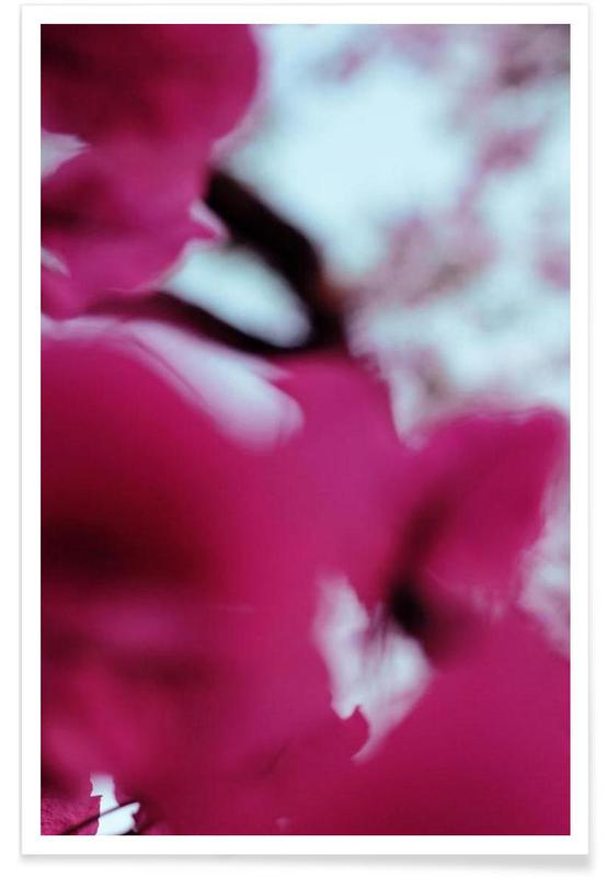 , Dogs Day Bougainvillea Poster