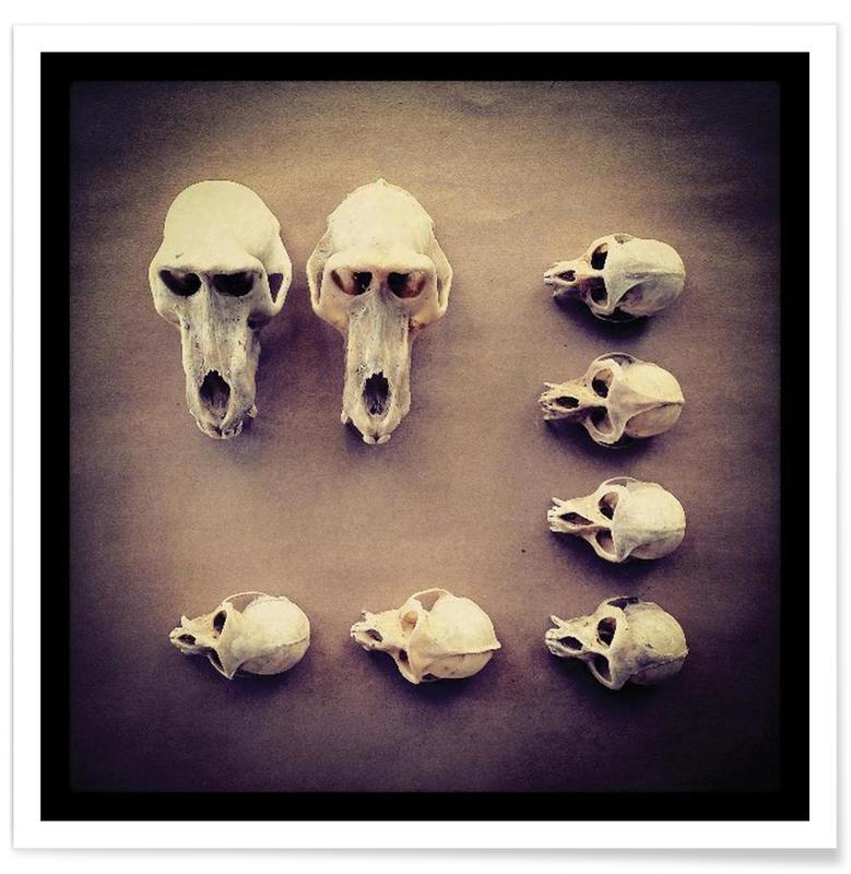 The Golden Skull affiche