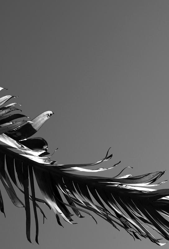 LA State of Mind (Venice Beach) acrylglas print