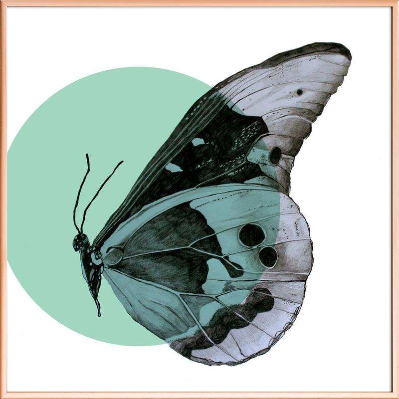 Moth Poster in Aluminium Frame