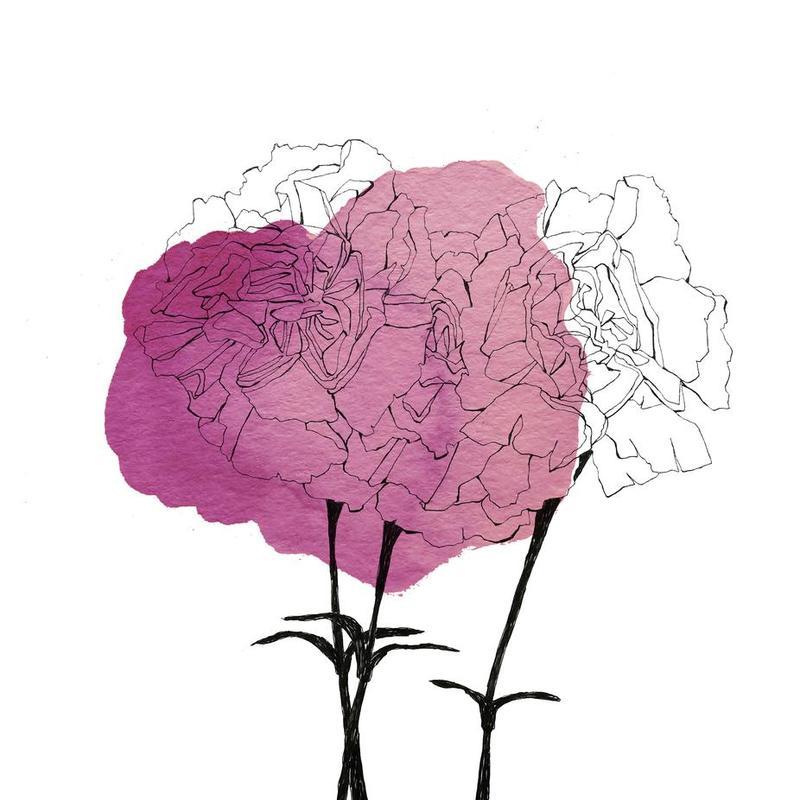 Carnation Impression sur alu-Dibond
