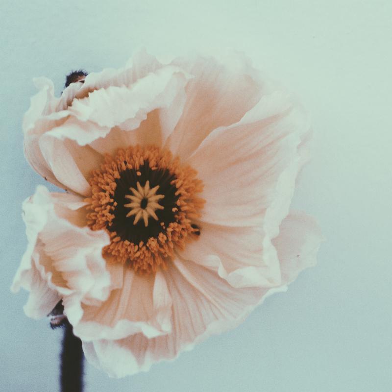 Bloom tableau en verre