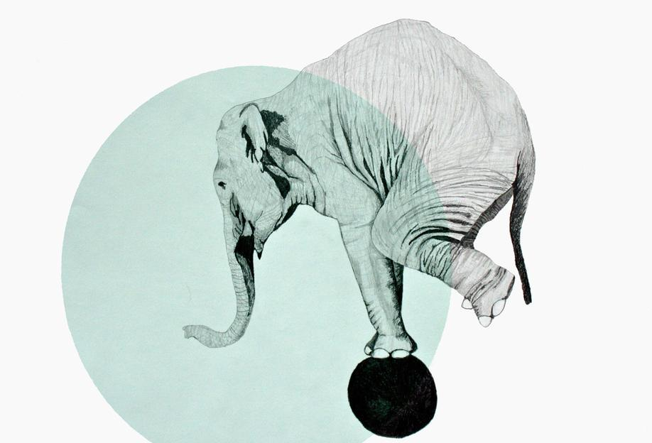 Elephant Aluminium Print