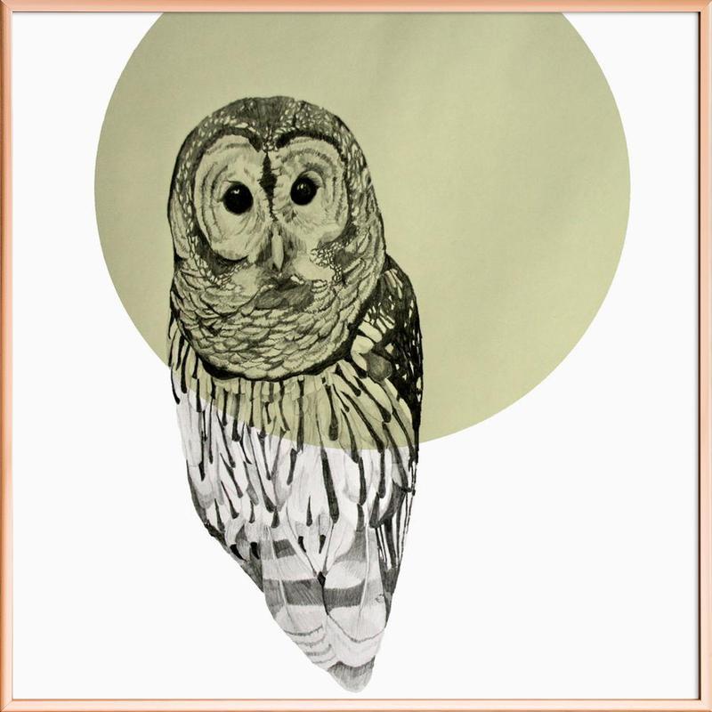 Owl -Poster im Alurahmen