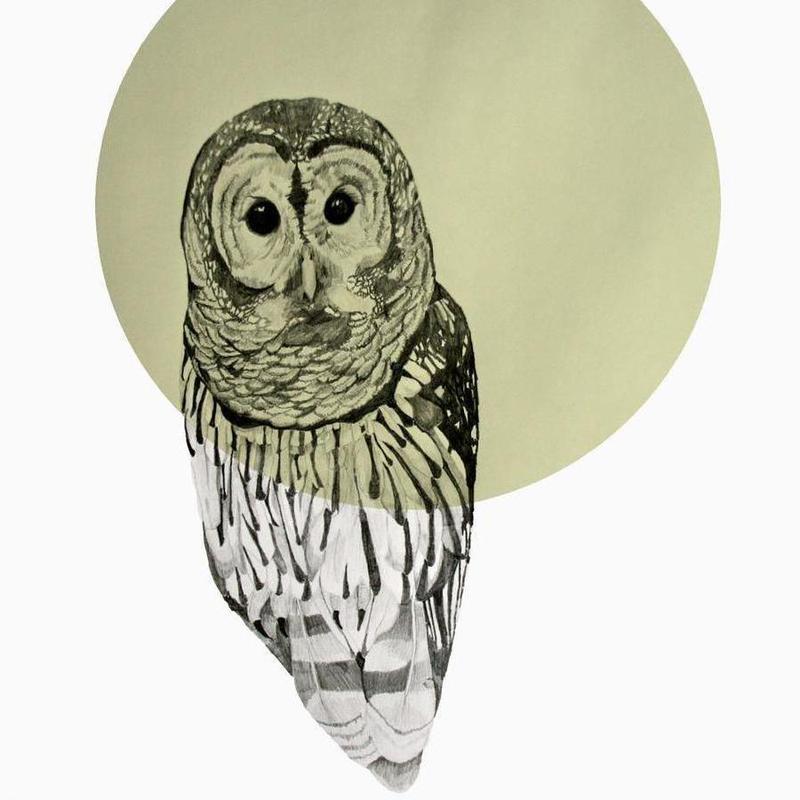Owl -Leinwandbild