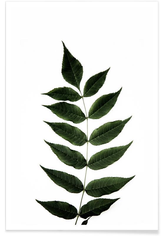 Leaves & Plants, One Leaf Poster