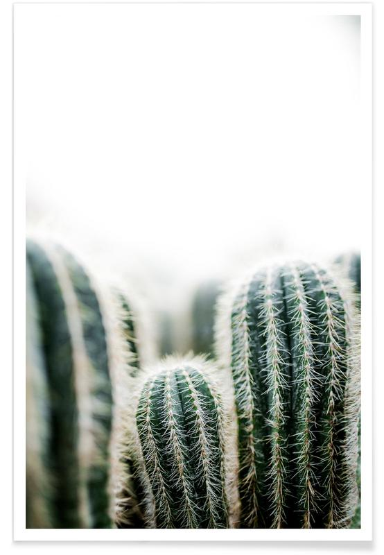 Cactus 1 affiche