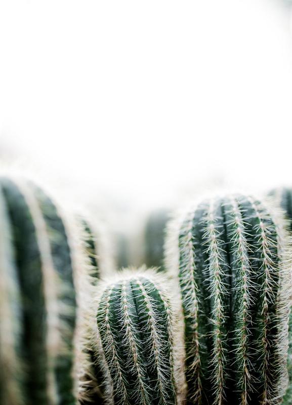 Cactus 1 -Leinwandbild