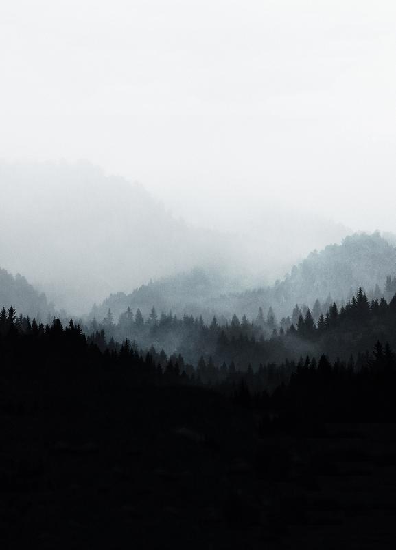 Woods 5Y Canvas Print