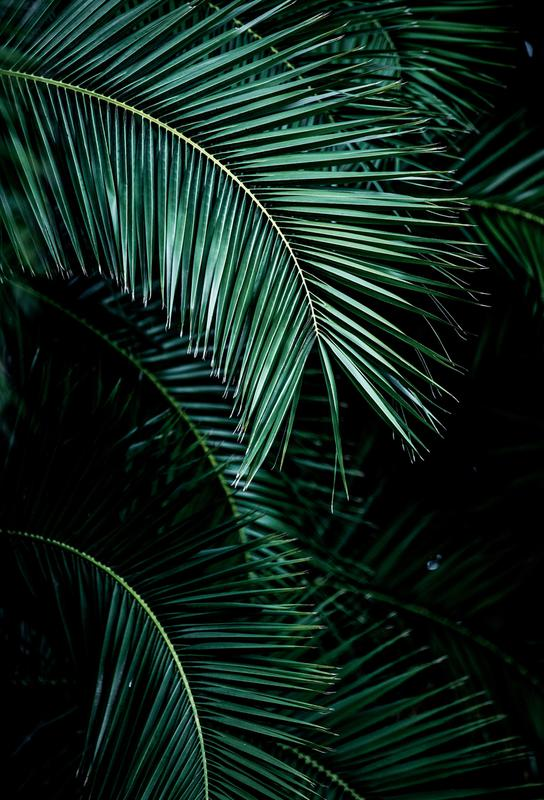 Palm Leaves 9 Aluminium Print