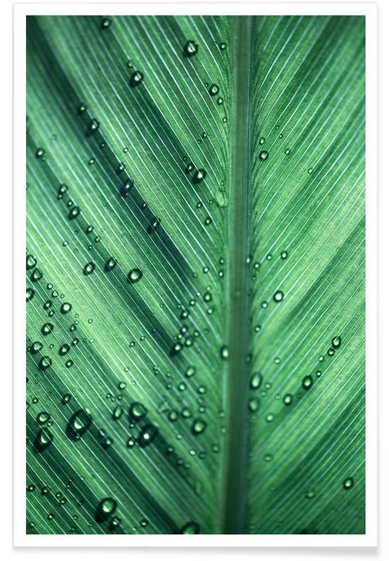 Palm Leaves 11 Poster