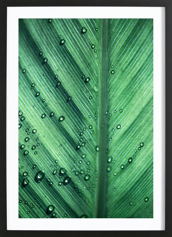 Palm Leaves 11 Framed Print