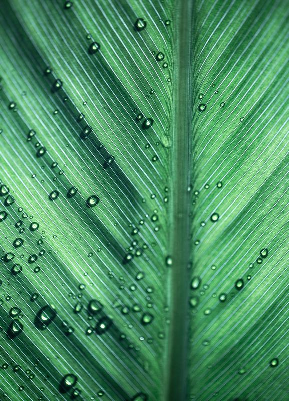 Palm Leaves 11 Canvas Print