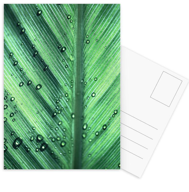 Palm Leaves 11 Postcard Set