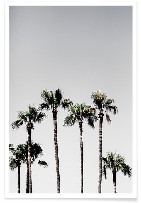 Palm Trees 5 Poster Juniqe