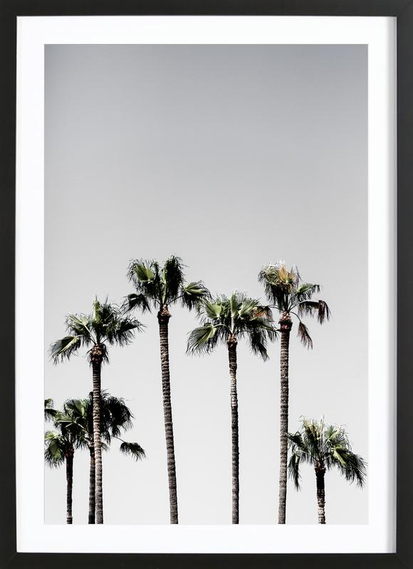 Palm Trees 5 Framed Print