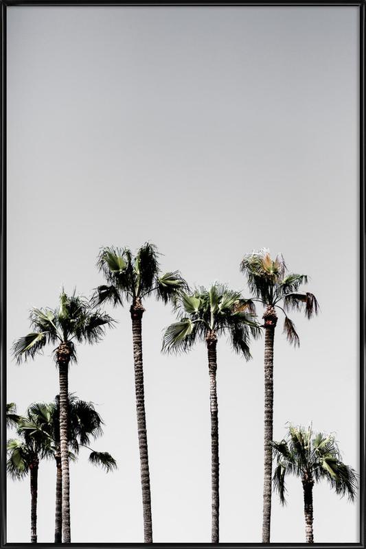 Palm Trees 5 Framed Poster