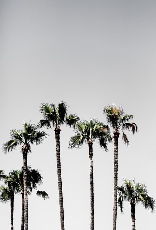Palm Trees 5 Aluminium Print
