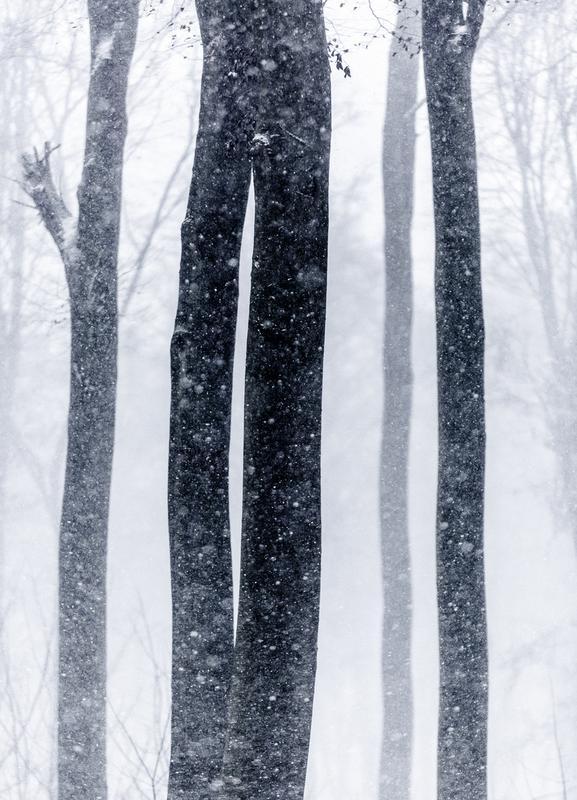 Snow Trees 2 canvas doek
