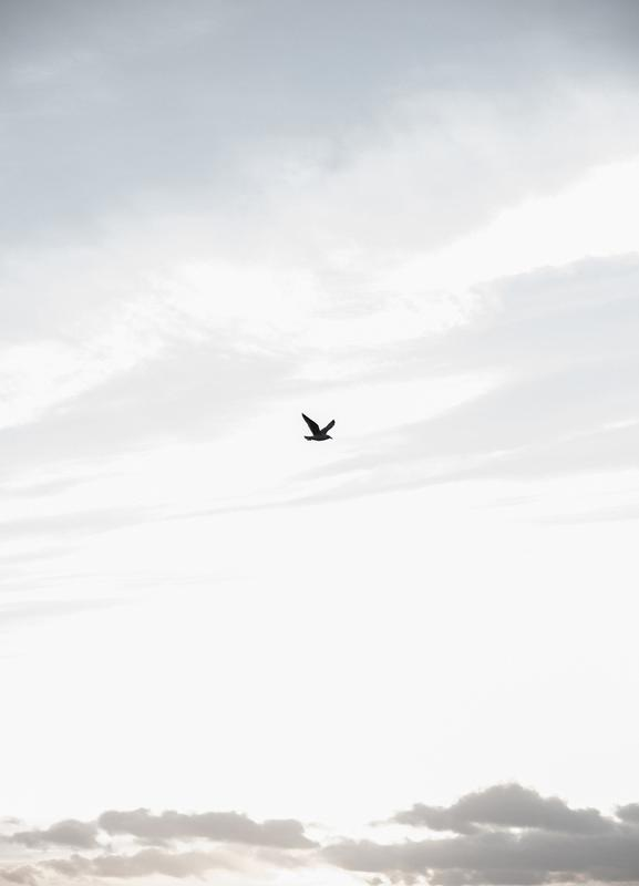 Flying High -Leinwandbild