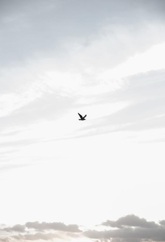 Flying High -Acrylglasbild