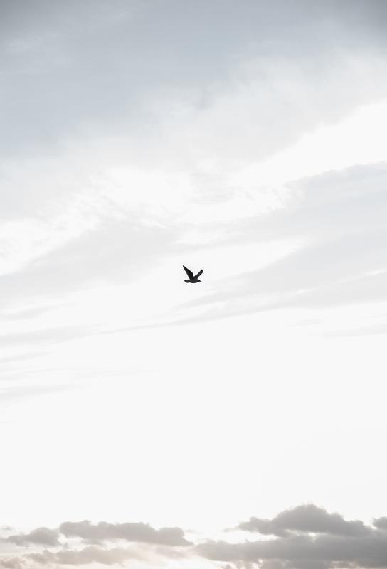 Flying High Aluminium Print