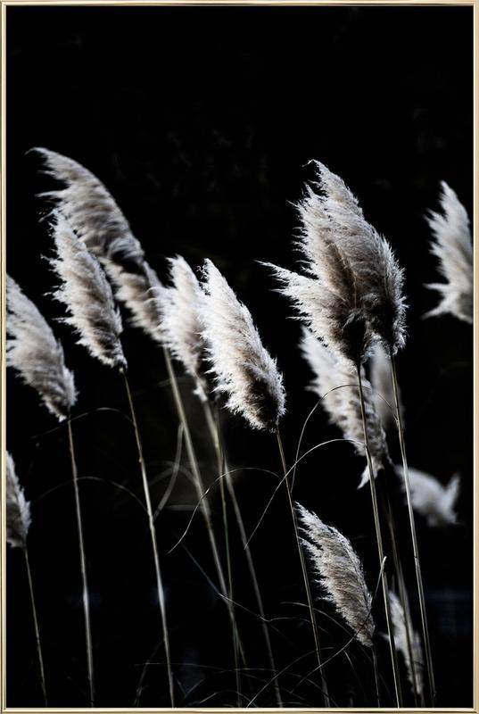 Grass 4 -Poster im Alurahmen