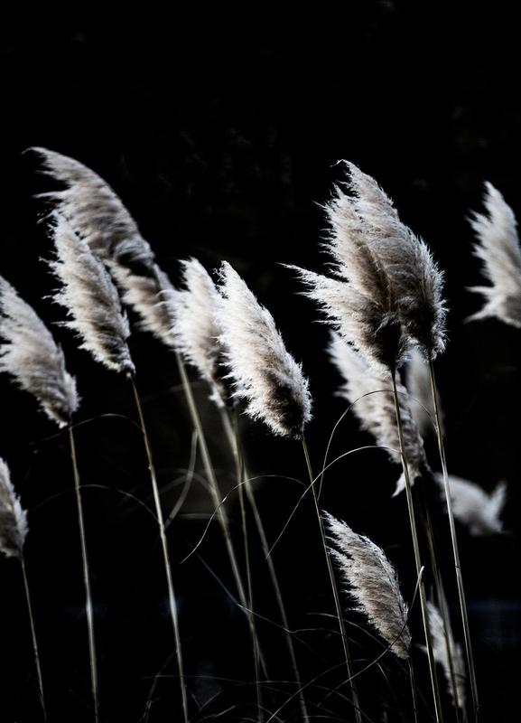 Grass 4 canvas doek