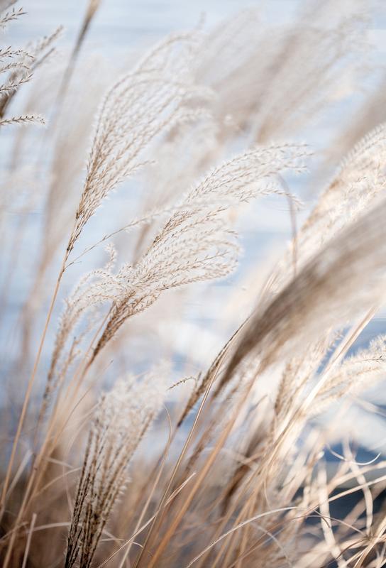 Grass 5 -Alubild