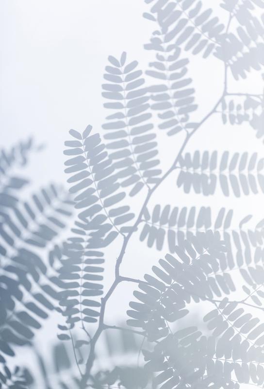 Sun-Kissed acrylglas print