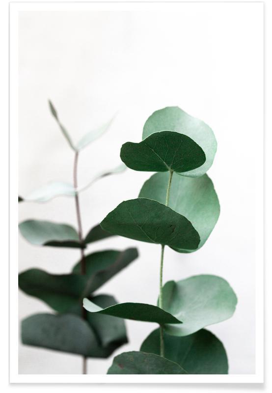Feuilles & Plantes, Eucalyptus 5 affiche