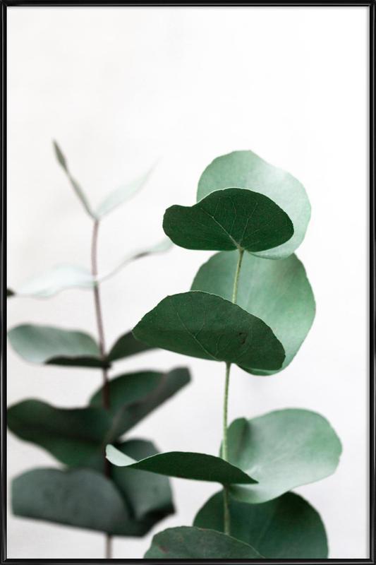 Eucalyptus 5 -Bild mit Kunststoffrahmen