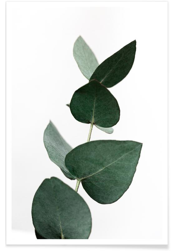 Eucalyptus 4 poster