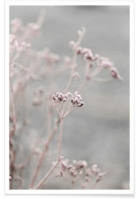 Feuilles & Plantes, Frosty Morning 3 affiche
