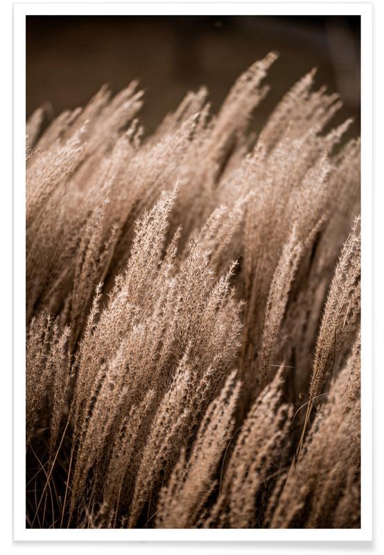 Feuilles & Plantes, Grass 16 affiche