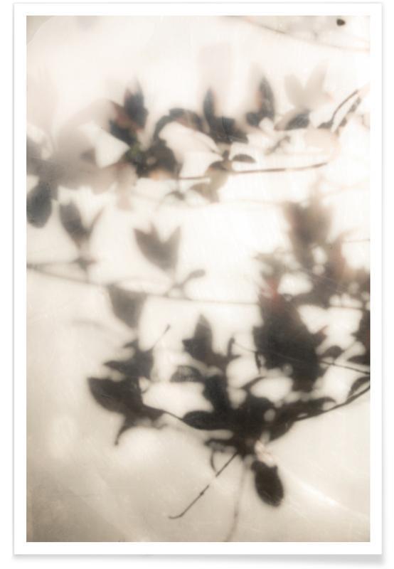 , Summer Shadows 2 affiche