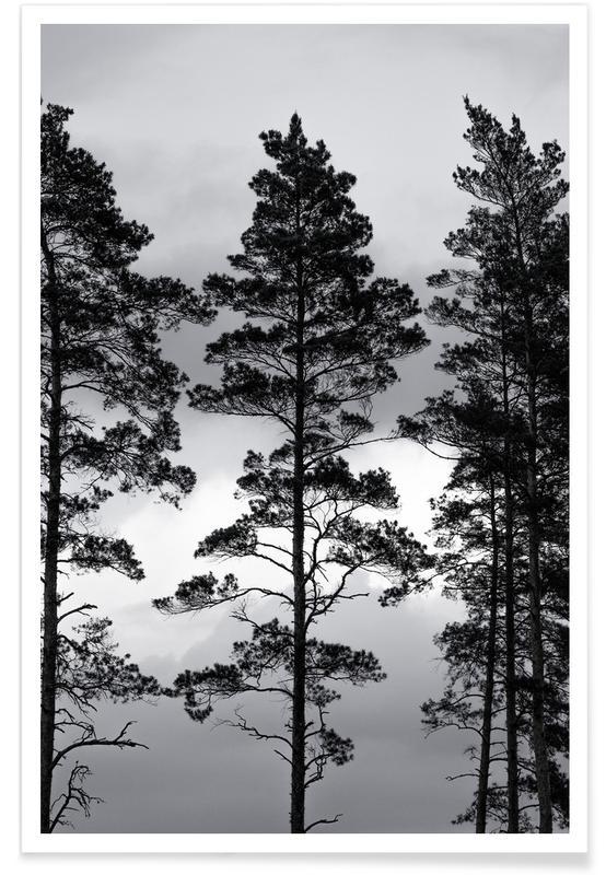 , Swedish Trees poster