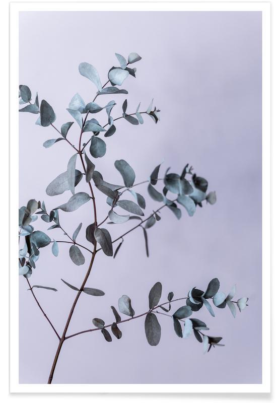 , Eucalyptus 13 Poster