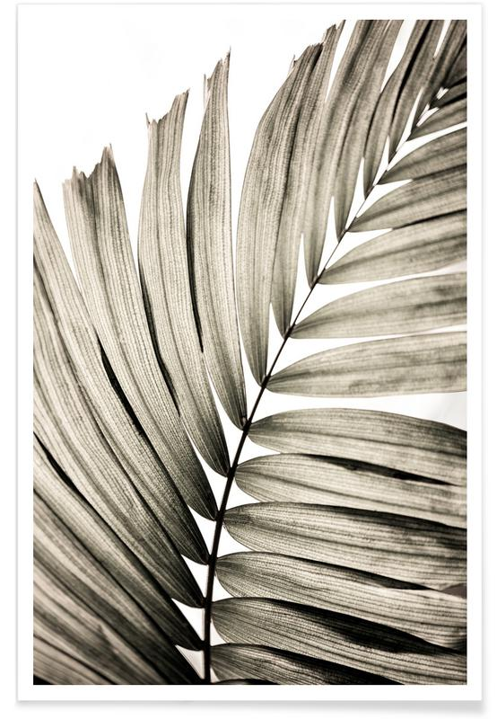 , Palm Leaves 22 affiche